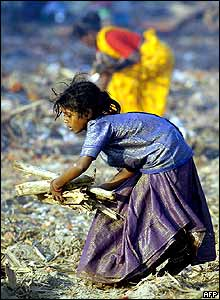 Girl forages for driftwood