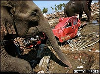 Elephants clear an area destroyed by the tsunami in Indonesia.