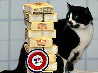 Mischief the cat looks at packets of butter which show how much weight he lost