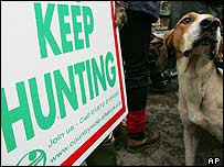 The ban on hunting with dogs has started
