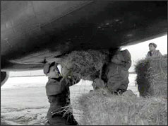 RAF personnel loading straw onto an aircraft