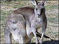 the kinds of animals that are usually victims of culling