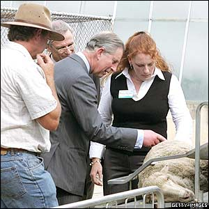 Prince Charles inspects a sheep at the Dryland Salinity Centre of the University of Western Australia