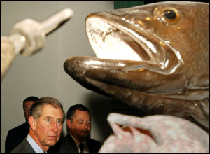 Prince of Wales sees a giant stuffed fish at the Maritime Museum at Freemantle Harbour