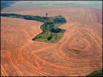 http://news.bbc.co.uk/media/images/40931000/jpg/_40931992_deforestation.jpg