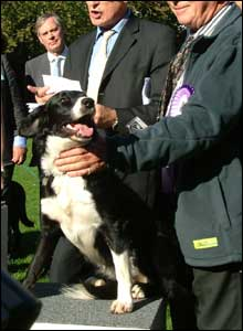 This is Bell, a 15-month-old collie Spaniel crossbreed owned by Lord Renton of Mount Harry.