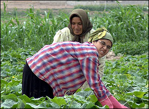 Two women in fields harvesting crop
