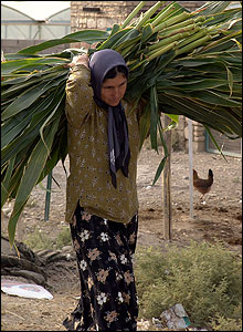 Woman carries foraged food for animals in village
