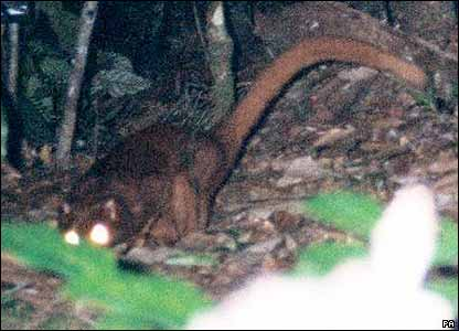 New animal species in Borneo
