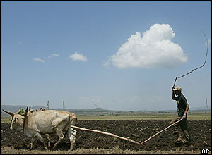 A farmer ploughs his land on the outskirts of the Ethiopian capital, Addis Ababa