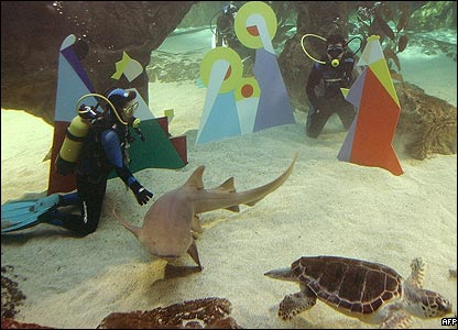 Divers get friendly with the residents as they install Christmas nativity figures in a shark aquarium at Madrid zoo