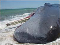 A stranded whale