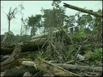 Amazon rainforest destruction (Picture: VT Freeze Frame)
