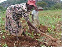 A woman farming in Zimbabwe