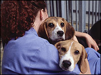 medical testing on animals debate