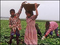 Children working in a field in Bangladesh