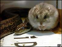 Gohan, right, and snake Aochan live together in a cardboard box
