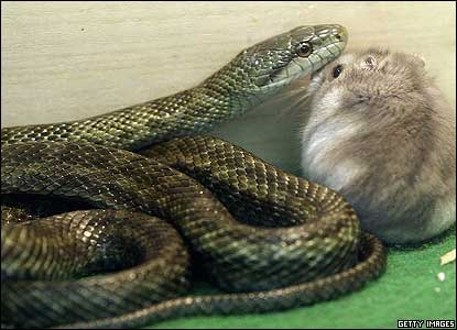 The friendship between the small rodent and the reptile has surprised their keepers, who say they have never seen anything like it.