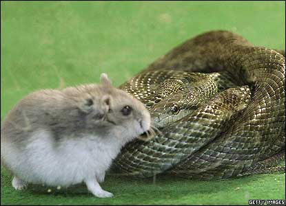 The snake called Aochan was offered the hamster as an alternative to frozen mice when it started refusing regular food.