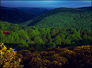 UK forest (copyright: Forestry Commission England)