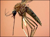 Mosquitoes spread malaria