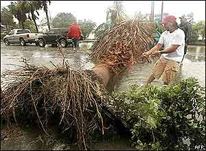 A Key West resident attaches a line to a fallen palm tree blocking the road