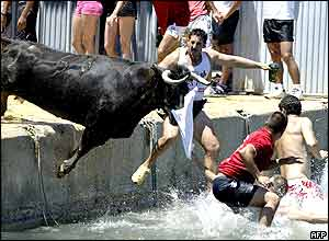 A bull pushes people into the water during the traditional bulls celebration on the sea in Denia, Alicante