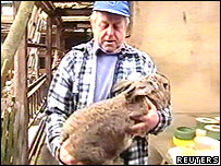 Giant rabbit