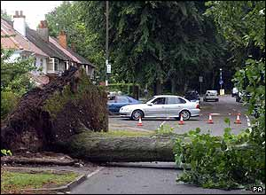 Uprooted tree in Birmingham.