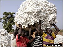 Cotton workers carry a big pile of cotton ready to be spun into cloth.