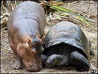 Owen the hippo and the tortoise