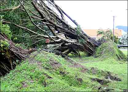 The next day you could see where the wind had uprooted trees and earth