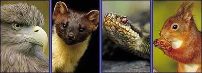 An eagle, a pine martin, a snake and a squirrel
