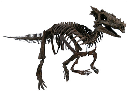 And here he is from the front. He roamed the Earth 66m years ago and his remains were found in 2003   Pic: Children's Museum Of Indianapolis
