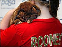 Rooney the injured rabbit