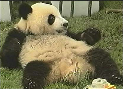 After her party Jing Jing had a little rest - it's hard work eating all that panda birthday cake!