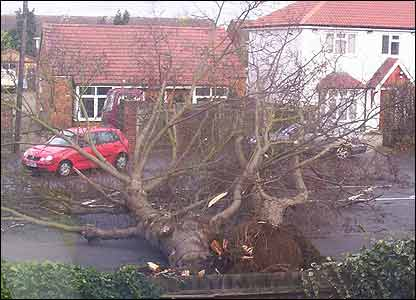 Sian, 7, from Slough sent in this picture taken from her bedroom window. It shows a tree that has blown down in the storms