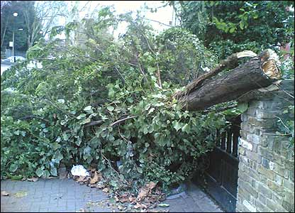 Abdul sent in this picture of an uprooted tree outside a house in London...