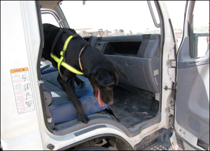 A military dog searching a vehicle for explosives