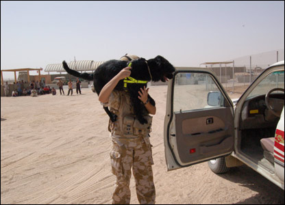 A military dog about to search a vehicle