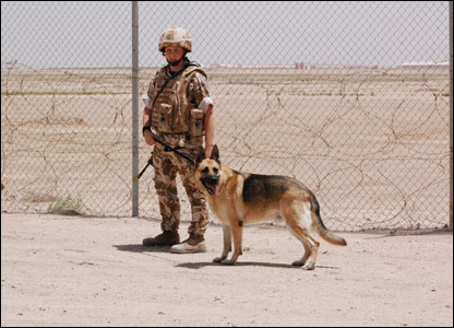 A soldier with a military guard dog
