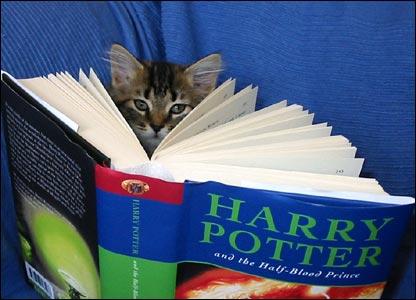 Foto de gato leyendo