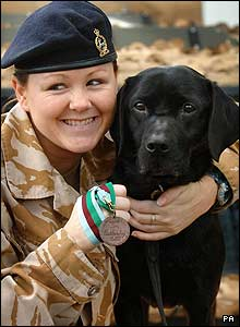 Sadie worked as a war dog - sniffing out bombs in places like Afghanistan..