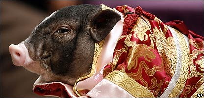 A pig dressed for Chinese New Year