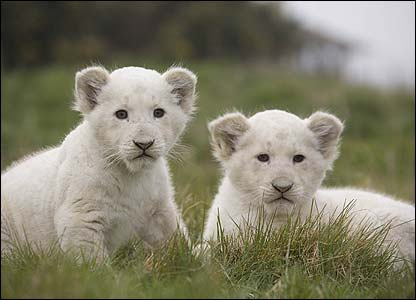 They've been named Tara and Zara! [West Midland Safari Park]