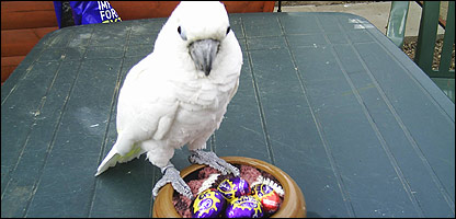 Pippa and her chocolate eggs