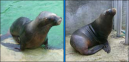 Carus and Boadicea [Pic: National Seal Sanctuary]
