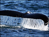 Whale hunting is a controversial issue