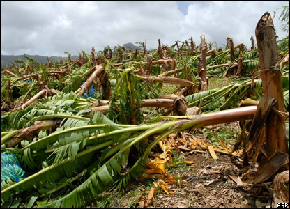 Flattened crops in Martinique