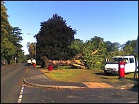 A tree toppled by a tornado in Woking